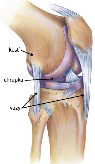 koleno - väzy