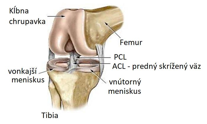anatómia menisku